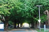 2014-10-25 東京 Day 8 東京大學、成田機場:02 東大-01.JPG