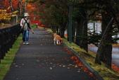 2014-10-21 東京 Day 4 輕井澤:06 輕井澤 矢崎公園-19.JPG