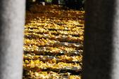 2013-11-29 關西賞楓  Day 4 西本願寺:04 西本願寺-14.JPG