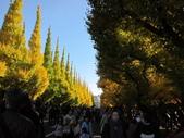 2012-11-25 東京自由行 Day 4 -- 銀杏並木、表參道、明治神宫:03 銀杏並木.JPG