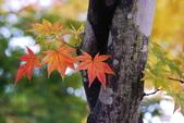 2014-10-21 東京 Day 4 輕井澤:05 輕井澤-12.JPG