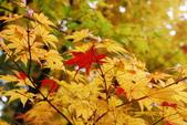 2014-10-21 東京 Day 4 輕井澤:05 輕井澤-11.JPG