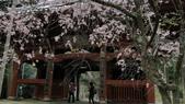 2015-04-14 京都八日遊 Day 4 天橋立、伊根:08 成相寺-24.JPG