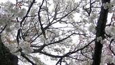 2015-04-13 京都八日遊 Day 3 六孫王神社、金閣寺、仁和寺、原谷苑:05 原谷苑-15.JPG