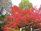 2012-11-24 東京自由行 Day3 -- 深大寺:05 深大寺.JPG