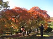 2012-11-25 東京自由行 Day4 -- 新宿御苑:17 新宿御苑.JPG