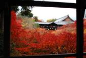 2013-11-28 關西賞楓 Day 3 東福寺:05 東福寺-02.JPG