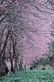 2014-02-15 武陵農場露營、合歡山賞雪:10武陵農場-35.JPG