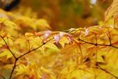 2014-10-21 東京 Day 4 輕井澤:05 輕井澤-.JPG