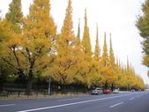 2012-11-25 東京自由行 Day 4 -- 銀杏並木、表參道、明治神宫:06 銀杏並木.JPG