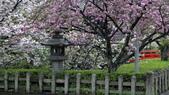 2015-04-13 京都八日遊 Day 3 六孫王神社、金閣寺、仁和寺、原谷苑:02 六孫王神社-22.JPG