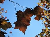 2012-11-25 東京自由行 Day4 -- 新宿御苑:19 新宿御苑.JPG