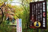 2014-10-21 東京 Day 4 輕井澤:11 雲場池-01.JPG