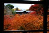 2013-11-28 關西賞楓 Day 3 東福寺:05 東福寺-03.JPG
