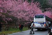 2014-02-15 武陵農場露營、合歡山賞雪:10武陵農場-23.JPG