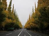 2012-11-25 東京自由行 Day 4 -- 銀杏並木、表參道、明治神宫:07 銀杏並木.JPG