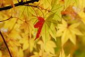 2014-10-21 東京 Day 4 輕井澤:05 輕井澤-13.JPG