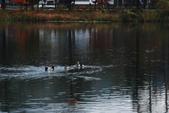 2014-10-21 東京 Day 4 輕井澤:06 輕井澤 矢崎公園-13.JPG