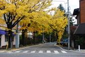 2014-10-21 東京 Day 4 輕井澤:10 往雲場池-09.JPG