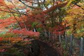 2014-10-21 東京 Day 4 輕井澤:11 雲場池-10.JPG