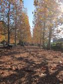 2012-11-25 東京自由行 Day4 -- 新宿御苑:20 新宿御苑.JPG