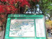 2012-11-24 東京自由行 Day3 -- 深大寺:08 深大寺.JPG