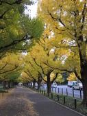 2012-11-25 東京自由行 Day 4 -- 銀杏並木、表參道、明治神宫:09 銀杏並木.JPG