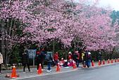 2014-02-15 武陵農場露營、合歡山賞雪:10武陵農場-24.JPG