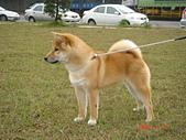 2008.01.31鐵球百福公園....:DSC02850.JPG