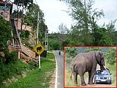 泰國普吉島映像:be aware of elephants