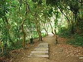 龍過脈森林步道:龍過脈10.JPG