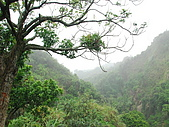 龍過脈森林步道:龍過脈12.JPG