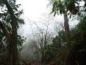 龍過脈森林步道:龍過脈16.JPG
