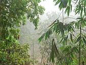 龍過脈森林步道:龍過脈17.JPG