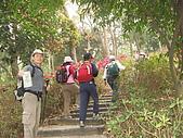 龍過脈森林步道:龍過脈06.JPG