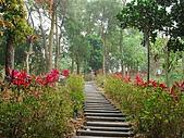龍過脈森林步道:龍過脈07.JPG