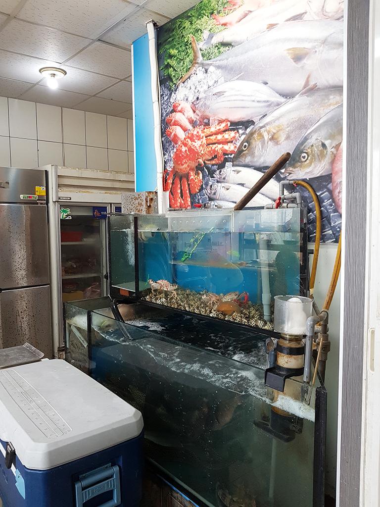 竹南漁泉海鮮料理:02新鮮漁獲.jpg