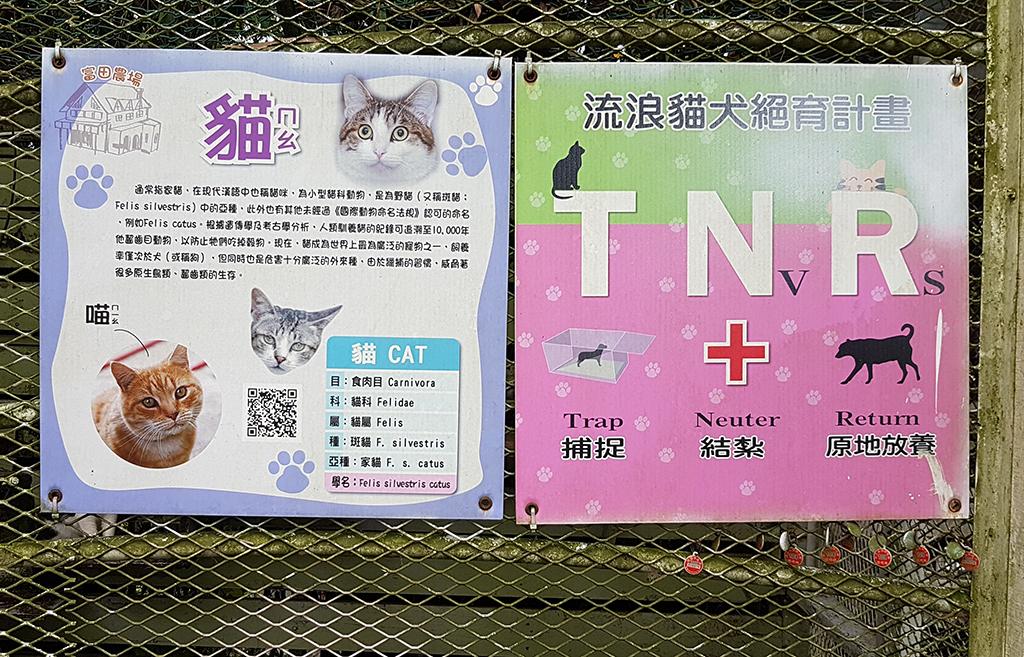 24流浪貓.jpg - 桃園大溪富田香草休閒農場