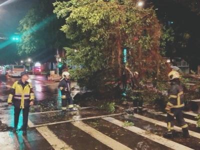 「南路樹倒塌」大雨襲擊北市地區,直接壓中女騎士