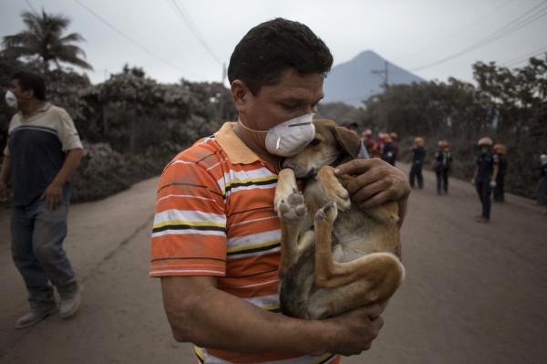「變種狗流感」H1N1,專家憂心會感染人類