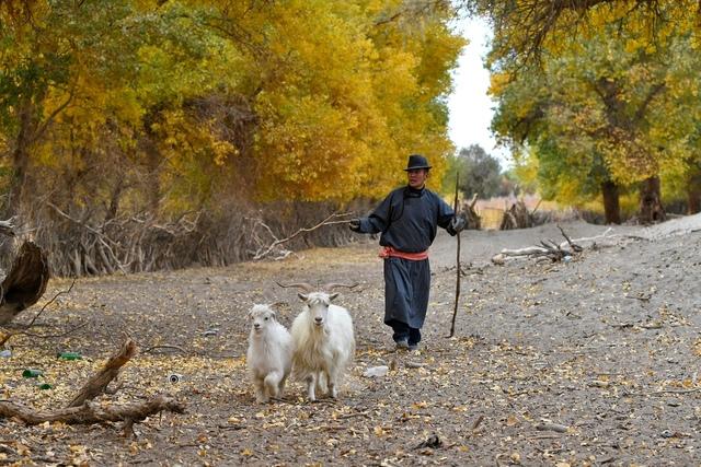 DSC_5855.jpg - 蒙古胡楊林及沙漠