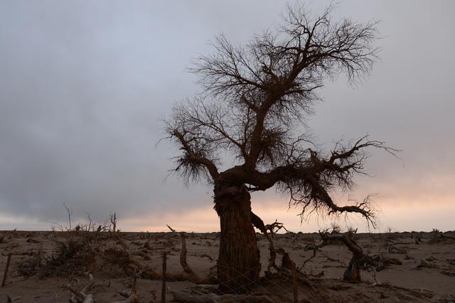 DSC_2130.JPG - 蒙古胡楊林及沙漠