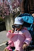 2009關西賞櫻:IMG_8918_調整大小.JPG