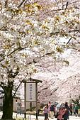2009關西賞櫻:IMG_8977_調整大小.JPG