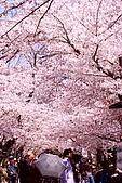 2009關西賞櫻:IMG_9082_調整大小.JPG