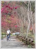 2013寒假山見花好旅遊網誌照片:IMG_0040.jpg