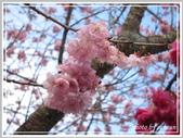 2013寒假山見花好旅遊網誌照片:IMG_0114.jpg