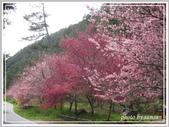 2013寒假山見花好旅遊網誌照片:IMG_0007.jpg