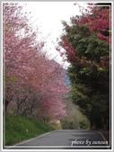 2013寒假山見花好旅遊網誌照片:IMG_0013.jpg