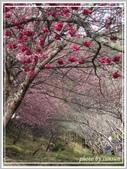 2013寒假山見花好旅遊網誌照片:IMG_0103.jpg